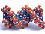 Расшифровка ДНК