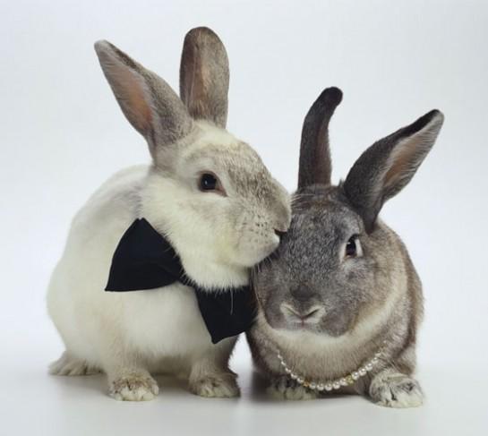 Бизнес-план разведение кроликов