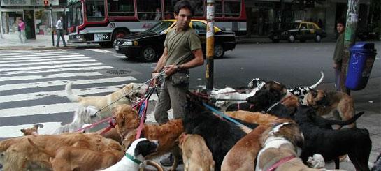 бизнес на выгуле собак
